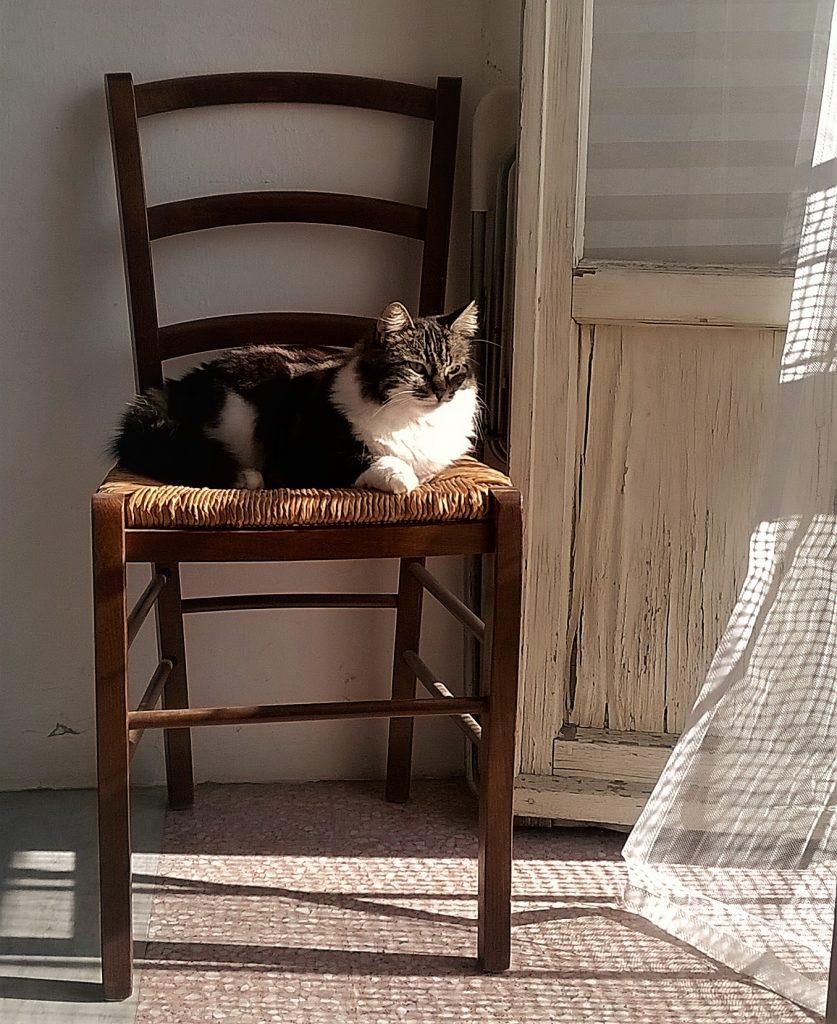 Gatto su sedia